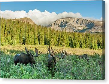 Usa, Colorado, Arapaho National Forest Canvas Print by Jaynes Gallery