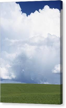 Usa, Idaho, Green Wheat Field, Clouds Canvas Print by Gerry Reynolds