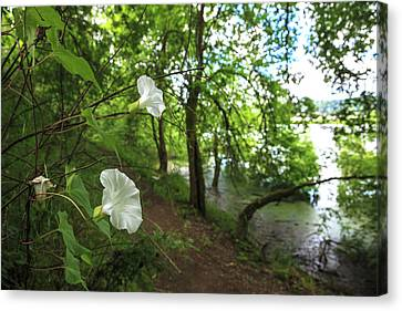 Usa, Oregon, Portland, Oak Bottoms Canvas Print