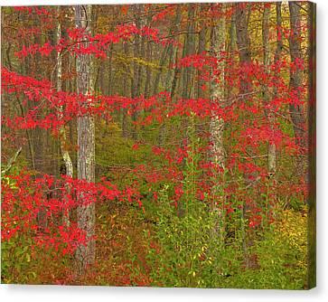 Usa, Pennsylvania, Delaware Watergap Canvas Print