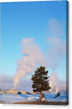 Usa, Wyoming, Yellowstone National Canvas Print by Scott T. Smith