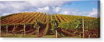 Vineyard At Napa Valley, California, Usa Canvas Print by Panoramic Images