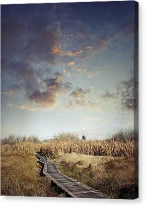 Wetland Walk Canvas Print by Les Cunliffe
