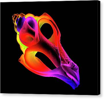 Scan Canvas Print - Whelk by K H Fung