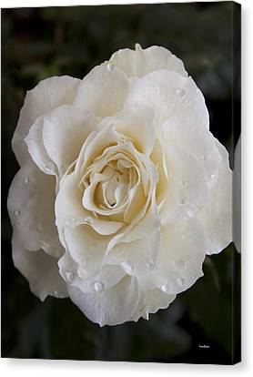 White Rose Canvas Print by Ivete Basso Photography