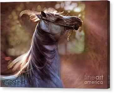 Crazy Horse Canvas Print - Wild At Heart by Angel  Tarantella
