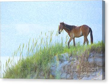 Wild Horse Canvas Print - Wild Horse On The Outer Banks by Diane Diederich