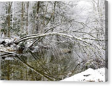 Winter Along Cranberry River Canvas Print by Thomas R Fletcher