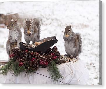 3 Wise Squirrels Canvas Print