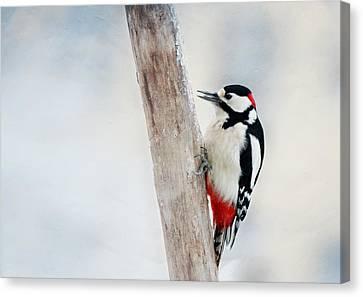 Woodpecker Canvas Print - Woodpecker by Heike Hultsch