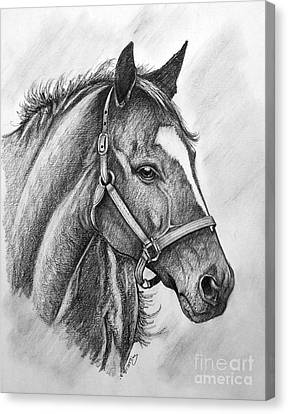 Canvas Print featuring the drawing Zenyatta by Patrice Torrillo