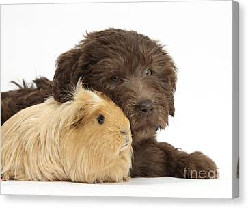 House Pet Canvas Print - Puppy And Guinea Pig by Mark Taylor
