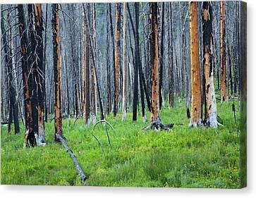 Idaho, Sawtooth National Recreation Canvas Print by Jamie and Judy Wild