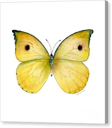 32 Dercas Lycorias Butterfly Canvas Print