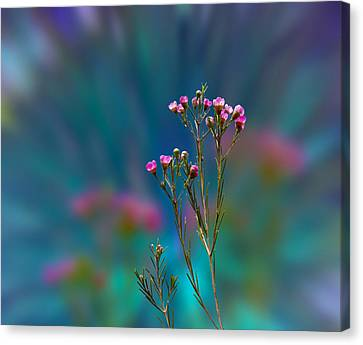 3398 Canvas Print by Peter Holme III