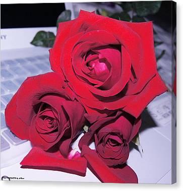 Roses For You  Canvas Print by Gornganogphatchara Kalapun