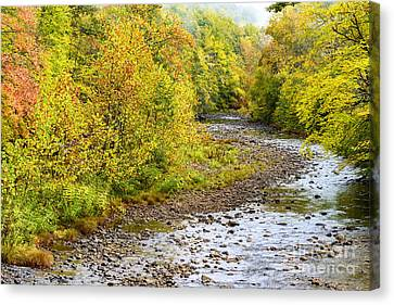 Williams River Autumn Canvas Print by Thomas R Fletcher