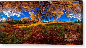 360 Under A Tree Canvas Print by Stephen Schwartzengraber