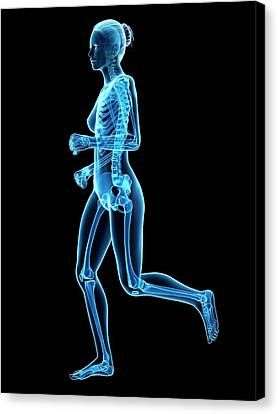 Skeletal System Of Runner Canvas Print by Sebastian Kaulitzki