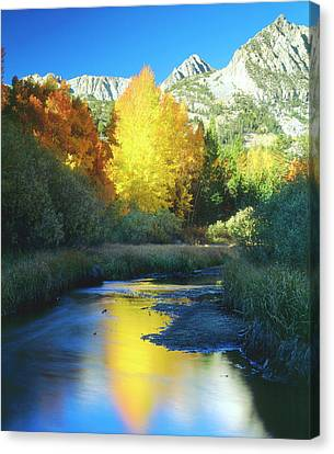 Usa, California, Sierra Nevada Mountains Canvas Print by Jaynes Gallery