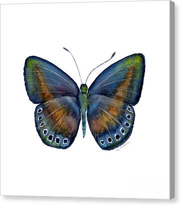 39 Mydanis Butterfly Canvas Print