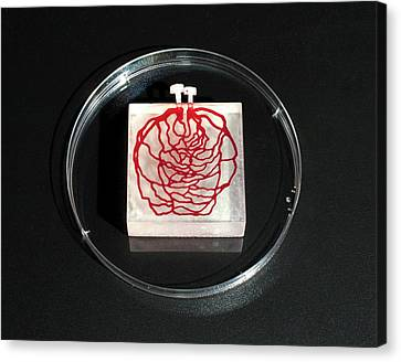 3d Printed Tissue Simulation Canvas Print by Michael J. Ermarth/food & Drug Administration