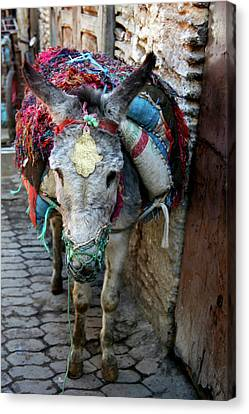 Africa, Morocco, Fes Canvas Print