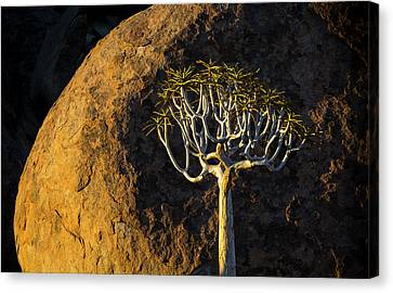 Africa, South Africa, Richtersveld Canvas Print by Jaynes Gallery