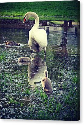 All In The Family Canvas Print by Cyryn Fyrcyd