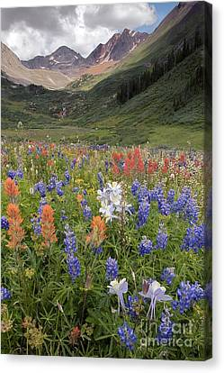 Alpine Flowers In Rustlers Gulch, Usa Canvas Print by Bob Gibbons