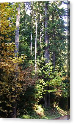 Autumn 8 Canvas Print