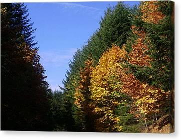 Autumn 9 Canvas Print by J D Owen