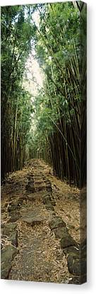 Bamboo Forest, Oheo Gulch, Seven Sacred Canvas Print