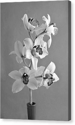 Still-life Canvas Print - Black And White Beauty by George Atsametakis