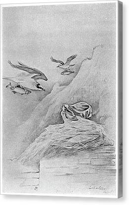 Osprey Canvas Print - Blackburn Birds, 1895 by Granger