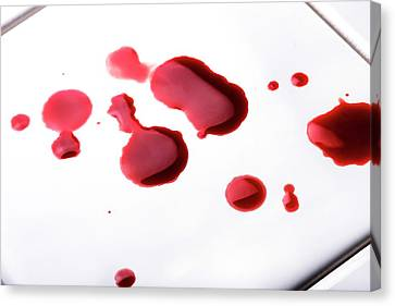 Blood Spatter Canvas Print by Cordelia Molloy