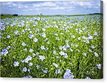 Blooming Flax Field Canvas Print by Elena Elisseeva