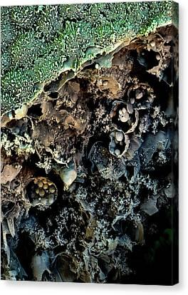 Broccoli Canvas Print by Stefan Diller