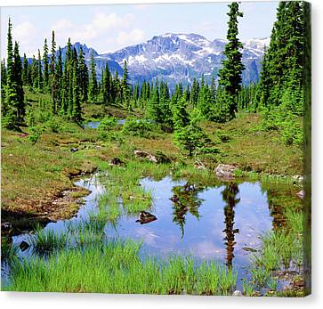 Canadian Marsh Canvas Print - Canada, British Columbia by Jaynes Gallery