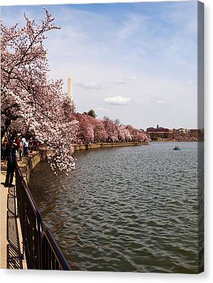 Cherry Blossom Trees In The Tidal Basin Canvas Print