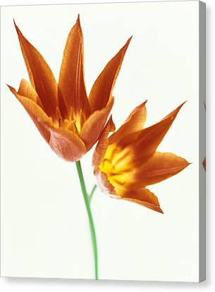 Close Up Of Flowers Canvas Print by Panoramic Images