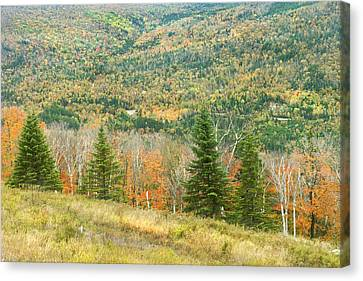 Maine Mountains Canvas Print - Colorful Fall Forest Near Rangeley Maine by Keith Webber Jr