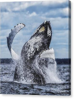 Dances With Whales Canvas Print by Nancy Dempsey