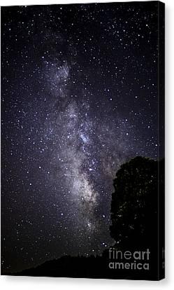 Dark Rift Of The Milky Way Canvas Print by Thomas R Fletcher