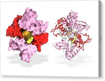Ebola Viral Protein 35 And Rna Canvas Print by Ramon Andrade 3dciencia