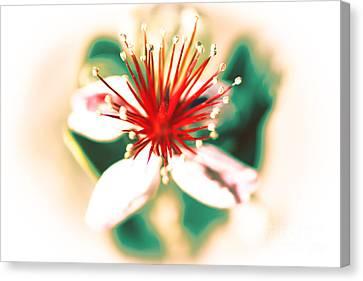 Canvas Print featuring the photograph Flower by Gunter Nezhoda