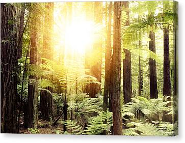 Forest Light Canvas Print by Les Cunliffe