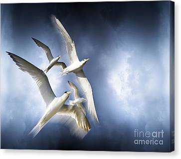 Sombre Canvas Print - Freedom by Jorgo Photography - Wall Art Gallery