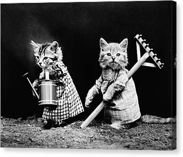 Frees Kittens, C1914 Canvas Print