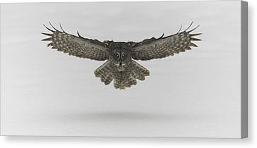 Great Grey Owl In Flight Canvas Print by Josef Pittner